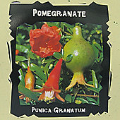 Pomegranate - Exotic Seed Collection - 1 packet (4 seeds)
