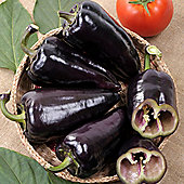Sweet Pepper 'Black Knight' F1 Hybrid - 1 packet (10 sweet pepper seeds)