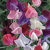 Sweet Pea 'Heirloom Bicolour Mixed' - 1 packet (25 seeds)