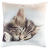 Novelty Cat Cushion