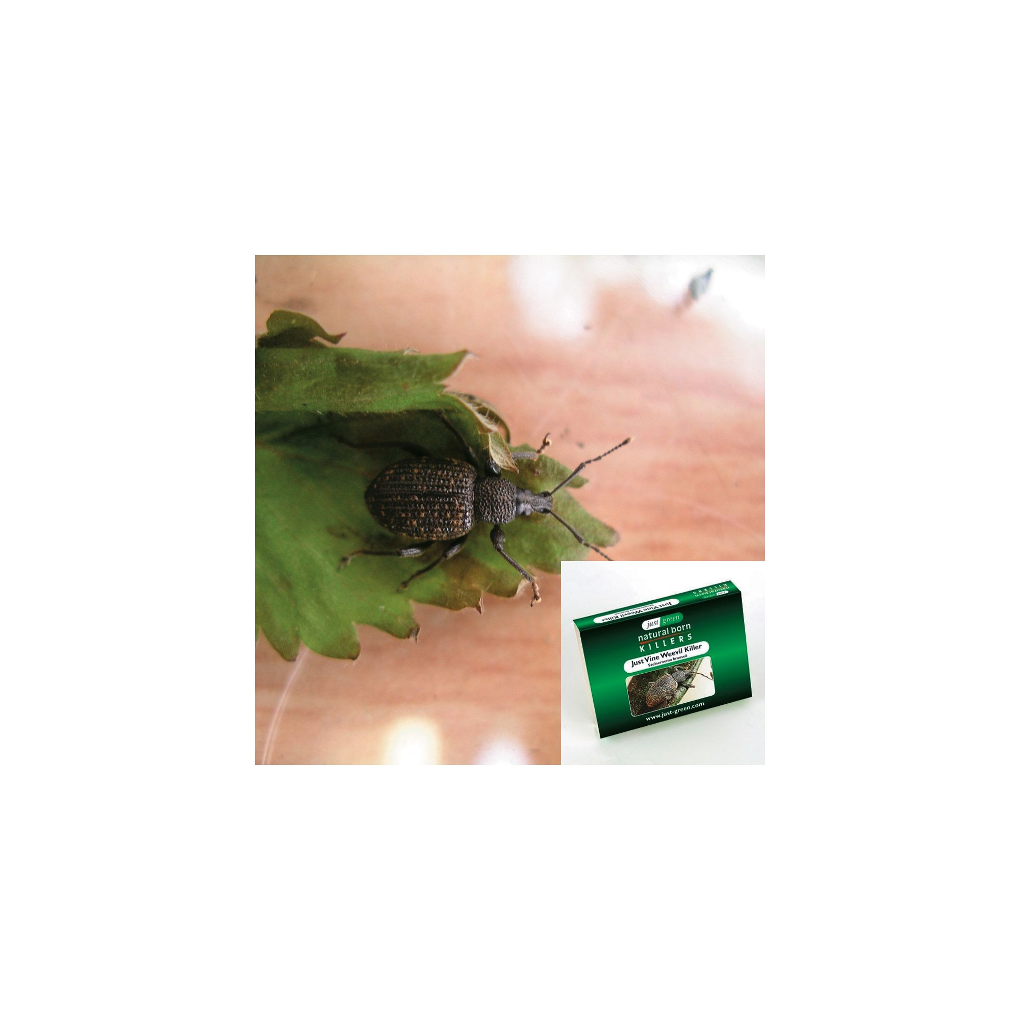category found for home and garden natural pest control vine weevil 1