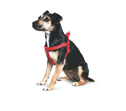 Ancol Padded Nylon Dog Harness Red 41-48Cm Small