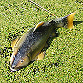 Detailed Floating Trout Resin Pond Garden Ornament Design A