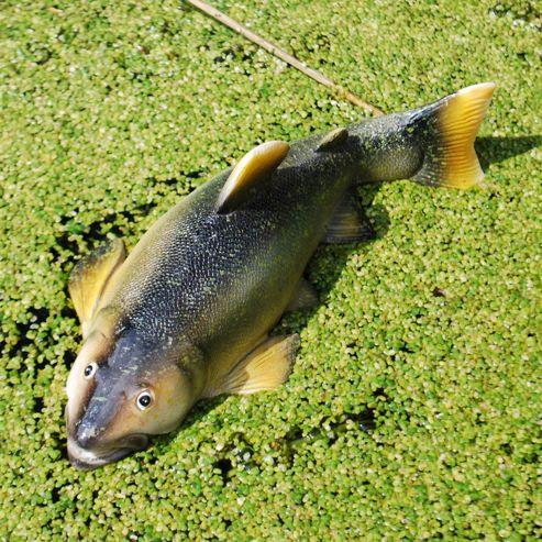 Detailed Floating Trout Resin Pond Garden Ornament Design A