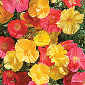 Californian Poppy 'Fruit Crush' - 1 packet (150 seeds)