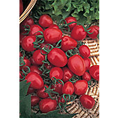 cherry tomato (tomato 'Red Alert')