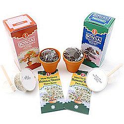 (Japanese Maple & Blue Colorado Spruce ) Bonsai Tree Kit