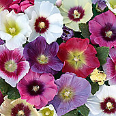Hollyhock 'Halo Mixed' - 1 packet (25 seeds)