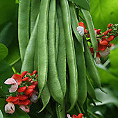 Runner Bean 'Tenderstar' - 1 packet (30 runner bean seeds)
