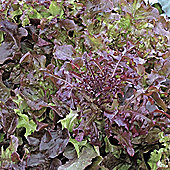 Lettuce 'Red Salad Bowl' (Loose-Leaf) - Vita Sementi® Italian Seeds - 1 packet (4000 lettuce seeds)
