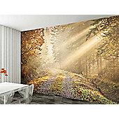 1 Wall Beautiful Golden Forest Scene Wallpaper Mural