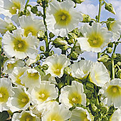 Hollyhock 'Halo White' - 1 packet (50 seeds)