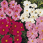 Cosmos bipinnatus 'Sonata Series Mixed' - 1 packet (30 seeds)