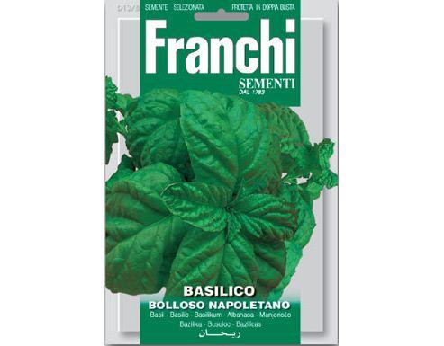 basil (basil 'Bolloso Napoletano')