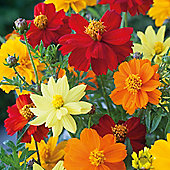 Cosmos sulphureus 'Brightness Mixed' - 1 packet (100 seeds)