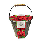 Taylors Tulip Abba Bulbs Outdoor Metal Gift Bucket