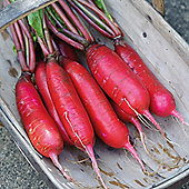 Chinese Radish 'Dragon' F1 Hybrid - 1 packet (80 seeds)