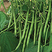 Dwarf Bean 'Sansoucy' - Part of the Alan Titchmarsh Collection - 1 packet (75 bean seeds)