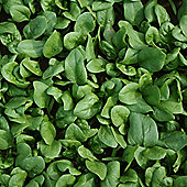 Spinach 'Amazon' F1 Hybrid - 1 packet (500 spinach seeds)