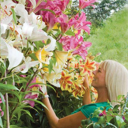 Tree Lily® Collection - 9 top-size bulbs - 3 of each variety