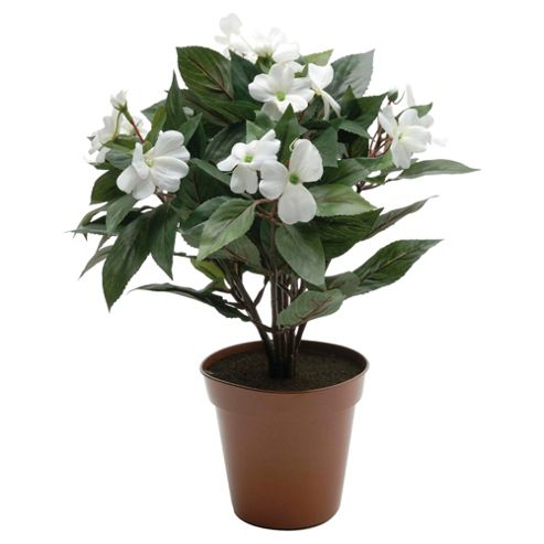 34cm Impatiens Plant In Pot With 7 Flowers - Cream