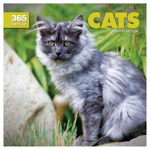 365 Days Of Cats 2014 Wall Calendar