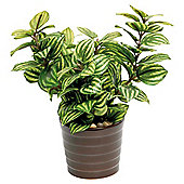 22CM PEPPEROMIA IN CERAMIC POT - GREEN / YELLOW