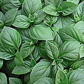 Basil 'Christmas' - 1 packet (150 seeds)
