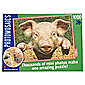 Paul Lamond Photomosaic Pig Puzzle 1000 piece