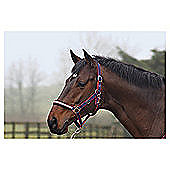 Cottage Craft Dotty Padded Headcollar Navy Pony