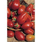 plum tomato (tomato 'San Marzano Red Plum')