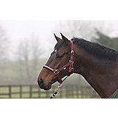 Cottage Craft Dotty Padded Headcollar Burgundy Pon