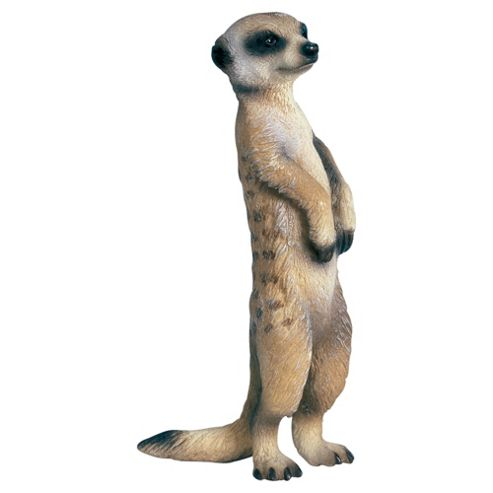 Meerkat 14368 Standing