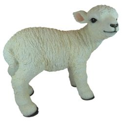 Real Life Lamb Ornament
