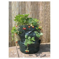Botanico Lets Grow Strawberry planters 2 pk