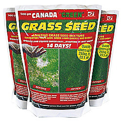 Canada Green Grass Seed, 500g