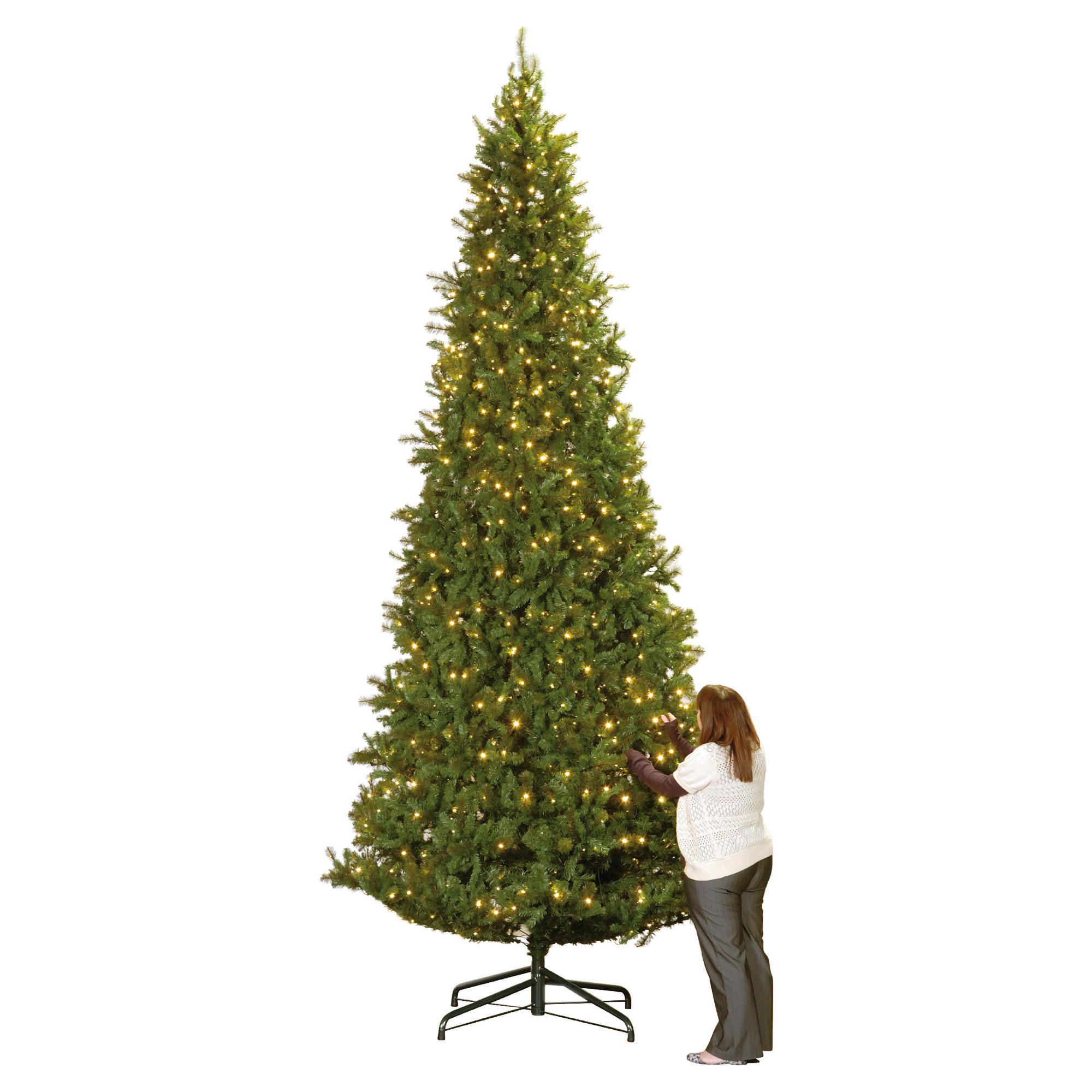 Colorado Spruce 15ft Tree at Tesco Direct