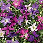 Petunia x hybrida 'Sparklers' - 1 packet (40 seeds)