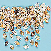 Mini Craft Shells - Pack of 200 seaside craft