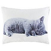 Novelty Kitten Cushion