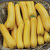 Courgette 'Sunstripe' F1 Hybrid - 1 packet (10 courgette seeds)