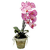 61cm Real Touch Artificial Phalaenopsis In Moss Pot - Hue Pink