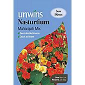 Nasturtium Maharajah Mixed