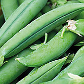 Pea 'Jumbo' (Maincrop) - 1 packet (250 pea seeds)