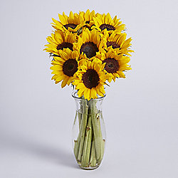 Simply British Sunflowers
