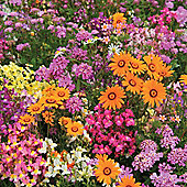 Easy Annuals 'Fairy Mixed' - 1 packet (1000 seeds)