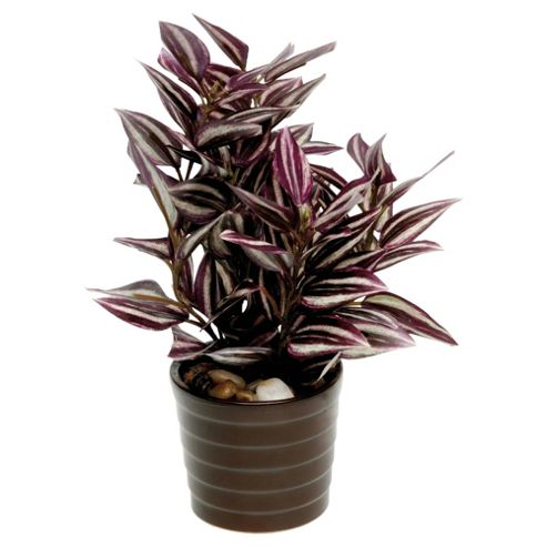 22Cm Tradescantia In Ceramic Pot - Purple