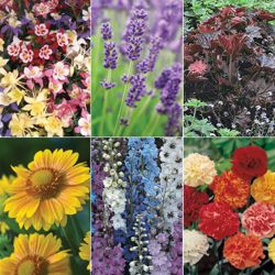 Perennial Collection B - 36 plugs - 6 of each variety