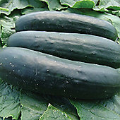 Cucumber 'Jogger' F1 Hybrid - 1 packet (12 cucumber seeds)