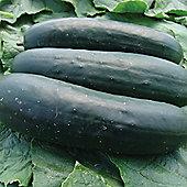 Cucumber 'Jogger' F1 Hybrid - 1 packet (12 cucumber seeds)